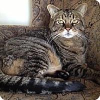Adopt A Pet :: Simon - Redondo Beach, CA