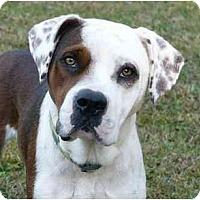 Adopt A Pet :: Boone - Mocksville, NC