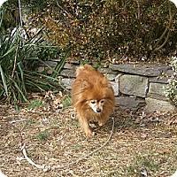Adopt A Pet :: EVEE - Mahopac, NY