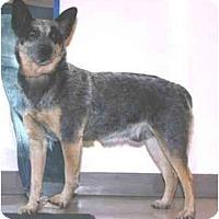 Adopt A Pet :: Handsome - Phoenix, AZ