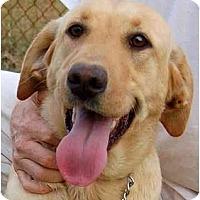 Adopt A Pet :: Chaya - Cumming, GA