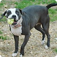 Adopt A Pet :: Luna - Magnolia, AR