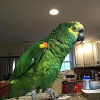Adopt A Pet :: Chevz - Blairstown, NJ