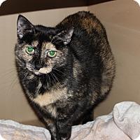 Adopt A Pet :: Lydia - Secaucus, NJ