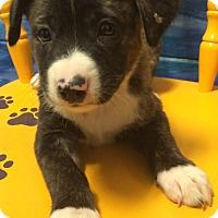 Adopt A Pet :: Fergie#4F - Orlando, FL
