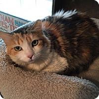 Adopt A Pet :: Princess Leia - Houston, TX
