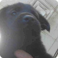 Adopt A Pet :: A270516 - Conroe, TX