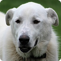 Adopt A Pet :: Bliss - Aurora, IL