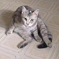 Adopt A Pet :: Casey - Eldora, IA