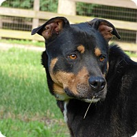 Rottweiler Mix Dog for adoption in Centerville, Tennessee - Cimeron