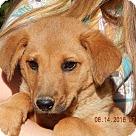 Adopt A Pet :: Honor (12 lb)