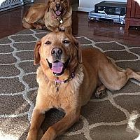 Adopt A Pet :: Star & Comet - Yorktown, VA
