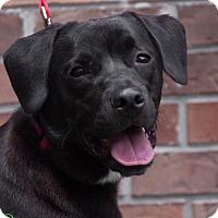 Adopt A Pet :: Teddy - Savannah, GA