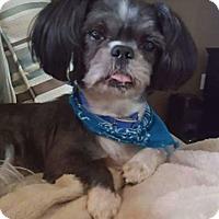 Adopt A Pet :: Harley - Killian, LA