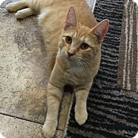 Adopt A Pet :: Savannah - Land O Lakes, FL