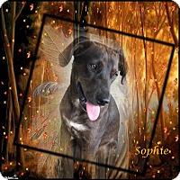 Adopt A Pet :: Sophie - Crowley, LA
