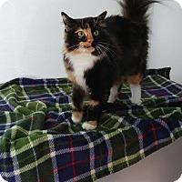 Adopt A Pet :: Pebbles - China, MI