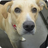 Adopt A Pet :: China - Union Grove, WI