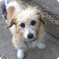 Adopt A Pet :: Sophia - Woonsocket, RI