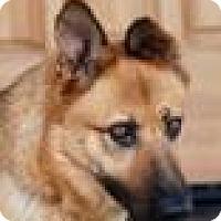 Adopt A Pet :: Tulsa - Portola, CA