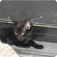 Adopt A Pet :: Professor - Davis, CA