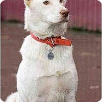 Adopt A Pet :: Nakita - Portland, OR