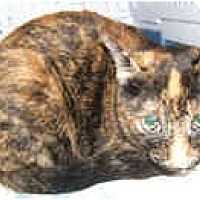 Adopt A Pet :: Monet - Dallas, TX