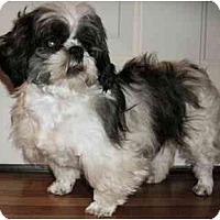 Adopt A Pet :: Kitty - Mooy, AL