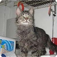 Adopt A Pet :: Harry&Nugget - Clay, NY