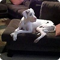 Adopt A Pet :: Ms. Monroe - Austin, TX
