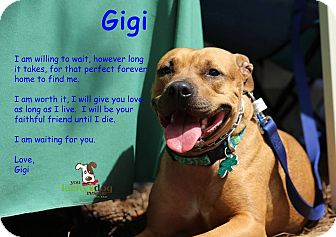 Pit Bull Terrier/Labrador Retriever Mix Dog for adoption in Alpharetta, Georgia - Gigi