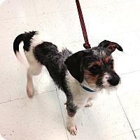 Adopt A Pet :: Scruffy - Nashville, TN