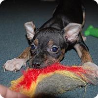 Adopt A Pet :: Lacy - Parker, CO