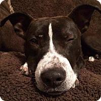 Adopt A Pet :: A289084 Carson - San Antonio, TX