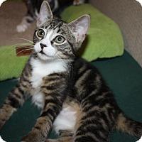 Adopt A Pet :: Derby (LE) - Little Falls, NJ