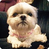 Adopt A Pet :: LULU - Eden Prairie, MN