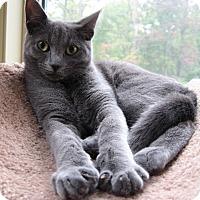 Adopt A Pet :: Mu Shu - Clarksville, IN
