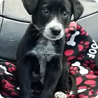 Adopt A Pet :: Charlie - Avon, NY