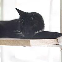 Adopt A Pet :: Cat 7 - Houston, TX