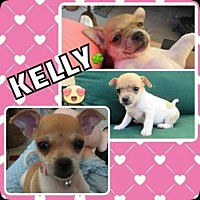 Adopt A Pet :: Kelly - Scottsdale, AZ