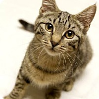 Adopt A Pet :: Michelle - Montclair, NJ