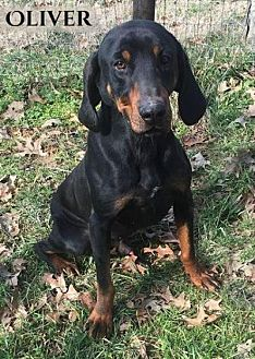 Black and Tan Coonhound Mix Dog for adoption in Columbia, Tennessee - Oliver