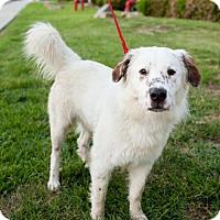 Adopt A Pet :: Lynde - San Diego, CA