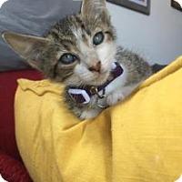 Adopt A Pet :: Moe - New York, NY
