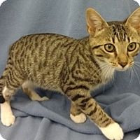 Adopt A Pet :: Samuel - Olive Branch, MS