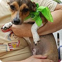 Adopt A Pet :: Sabrina - Baileyton, AL