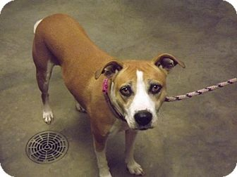 Terrier (Unknown Type, Medium)/Labrador Retriever Mix Dog for adoption in Ottawa, Kansas - Fran
