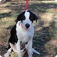 Adopt A Pet :: Duke - Conway, AR