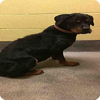 Adopt A Pet :: *HOPE - Upper Marlboro, MD
