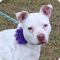 Adopt A Pet :: Mona - Pluckemin, NJ